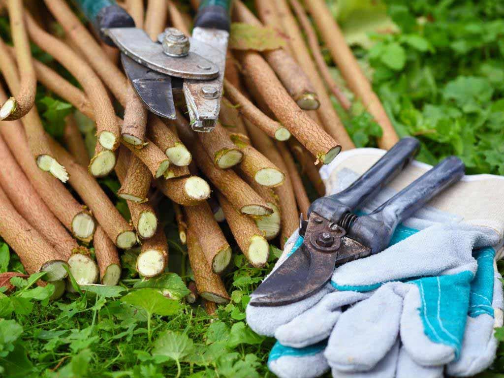 Mit dem Rückschnitt von Ziersträuchern und Strauchrosen sollte bis Ende Februar gewartet werden. copyright: Envato / Nataljusja