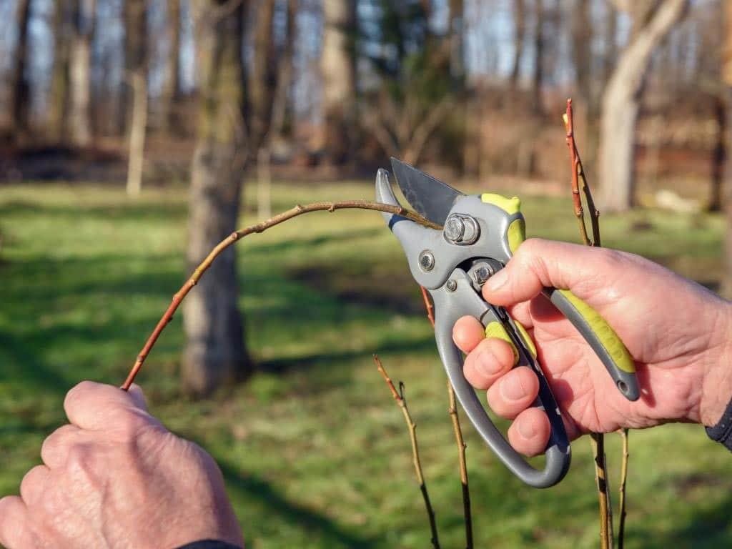 Im Frühling benötigen die Gehölze im Garten einen kräftigen Rückschnitt. copyright: Envato / ivankmit