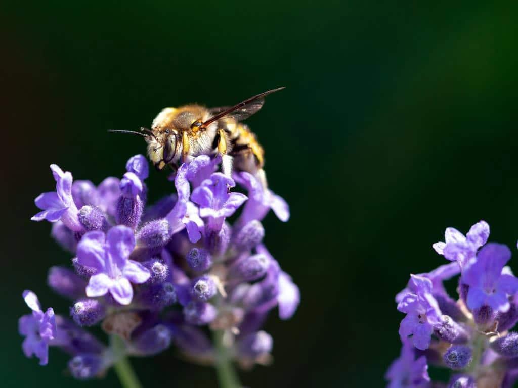 Nachhaltig und naturnah sollte der Garten sein