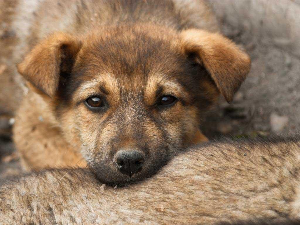 Unterbringung von Tieren im Kölner Tierheim