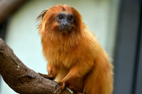 Zahlreiche tierische Bewohner haben im Kölner Dschungel ihr neues Zuhause gefunden.